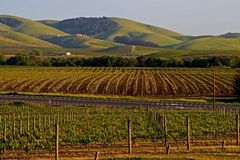 Napa Valley vineyard at sunset Stock Photography