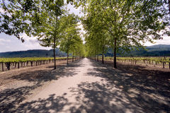 Napa Valley Vineyards Stock Photography