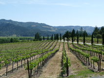 Napa Valley Vineyards Royalty Free Stock Image