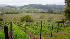 Napa Valley Vineyards Stock Photo