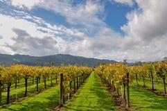 Napa Valley vineyards, California, USA Stock Image