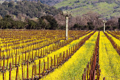 Napa Valley Vineyards and Mustard in Spring Royalty Free Stock Photography