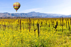 Napa Valley Vineyards and Mustard in Spring Stock Photo