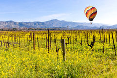 Napa Valley Vineyards and Mustard in Spring. Wine Country in Napa Valley California in spring with wild mustard plant blooming and hot air balloon Royalty Free Stock Image