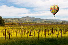 Napa Valley Vineyards and Mustard in Spring Royalty Free Stock Photo