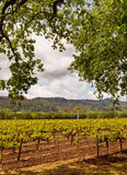 Napa Valley Vineyards, Spring, Mountains, Sky, Clouds,  Hot Air Balloon. Wine Country in Napa Valley California in spring with mountains, sky and clouds Stock Photo
