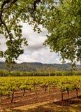 Napa Valley Vineyards, Spring, Mountains, Sky, Clouds,  Hot Air Balloon Stock Photo