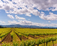 Napa Valley Vineyards, Spring, Mountains, Sky, Clouds Royalty Free Stock Images