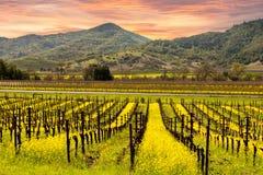 Napa Valley Vineyards Sunrise stock photo