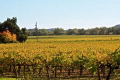 Napa Valley Vineyards Royalty Free Stock Photo