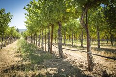 Napa Valley vingård royaltyfri foto