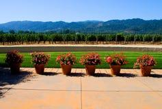 Napa Valley vingård royaltyfri bild