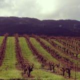 Napa Valley Vinyard. Endless vineyard in Napa Valley, California Royalty Free Stock Photo