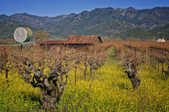 Napa Valley, Wine Country California Stock Images