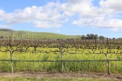 Napa- Valleyfrühlings-Senf-Ansicht Lizenzfreies Stockfoto