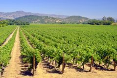 Napa Vineyard. Rustic vineyard and winery located in Napa Valley, California Royalty Free Stock Images