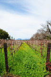 Napa Vineyard Row Stock Photo