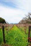 Napa Vineyard Row. A row of vineyards in Napa California Stock Photo