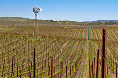 Napa Vineyard with Windmill and Blue Sky Stock Photo