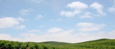 Napa Vineyards. A scenic landscape of the napa valley vineyards royalty free stock photos