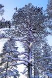 Napapiiri Arktyczny okrąg, Rovaniemi Finlandia Święty Mikołaj wioska zdjęcia stock