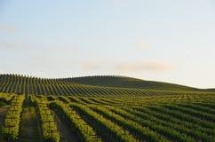 Napavallei van druivengebieden op de manier aan santa rosa Stock Foto