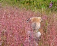 Nape który pierwszy raz zobaczył dzikiego natury amon domowy szczeniak obrazy stock