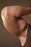 napinający bicepsy Zdjęcia Stock