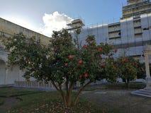 Naples - arbre de camélia dans le cloître de San Martino image stock