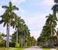 Naples beach streets with palm trees Florida US Royalty Free Stock Images