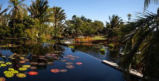 Reflective pond with water lilies and plants at the Naples Botan. Naples, Florida, USA – March 4, 2018: Reflective pond with water lilies and plants at the Stock Photography
