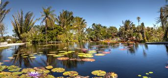 Reflective pond with water lilies and plants at the Naples Botan. Naples, Florida, USA – March 4, 2018: Reflective pond with water lilies and plants at the Stock Image