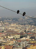 Naples panorama wit pidgeon Royalty Free Stock Image