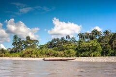 Napo flod ecuador royaltyfri bild