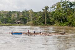 NAPO, PERU - JULY 16, 2015: Local people transport logs on river Nap. O royalty free stock photography