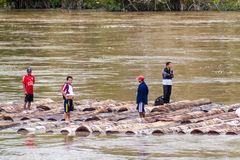 NAPO, PERU - JULY 16, 2015: Local people transport logs on river Nap. O royalty free stock photo