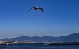 Napoli-Hafen Lizenzfreies Stockfoto