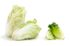 Nappa cabbage and Baby Cos lettuce put in beautiful isolate white background. Vegetable Nappa cabbage and Baby Cos lettuce put in beautiful cup isolate on white Stock Photography