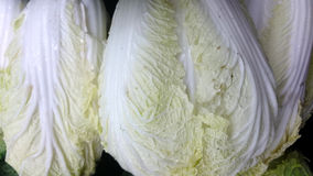 Nappa cabbage, Brassica rapa pekinensis Royalty Free Stock Photos