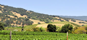 Nappa Valley Stock Images