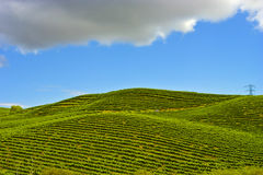 Nappa Vineyards. On an early spring afternoon stock image