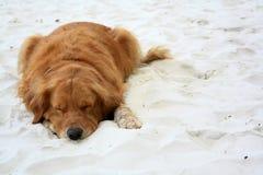 Napping собака Стоковые Фотографии RF