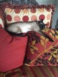 napping Стоковое Фото