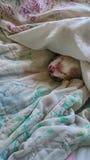 napping Стоковые Изображения