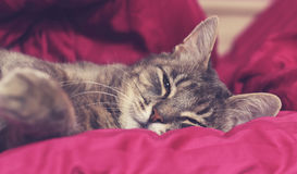 Napping royalty free stock photography