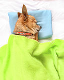 Napping dog Stock Images