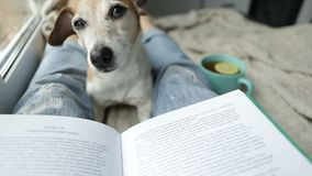 Napping dog and book. Perfest relaxed cozy weekend. Hot tea and interesting book. Perfect chilling moment. Video stock video