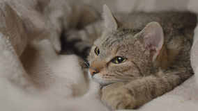 Napping kitty. Young cat taking a nap in a comfortable bed Stock Photography