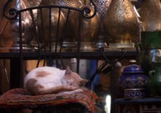 Napping time at the souk. Cat napping at a shop in Marrakesh`s souk Royalty Free Stock Photography
