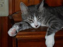 Naptime για το γατάκι Momma Στοκ Εικόνα